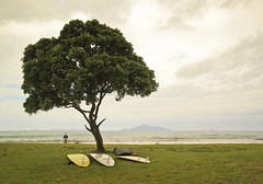 3 boards and a tree - Waipu Cove - New Zealand (Nick Caro - Photography) Tags: sea newzealand tree water landscape surf waves board surfing caro nz northisland eastcoast waipu waipucove nickcaro nickcarophotography wwwnickcarophotographycouk
