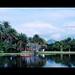 . Bosque da Barra - Parque Arruda Câmara