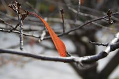 Autumn Leaf (Arif Lukito) Tags: autumn nature leaves japan nagasaki tamronspaf1750mmf28xrdiiildasphericalif canoneos50d