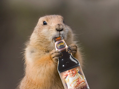 groundhog-beer