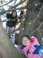 Girls in the Tree