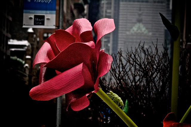 Roses Installation on Park Avenue