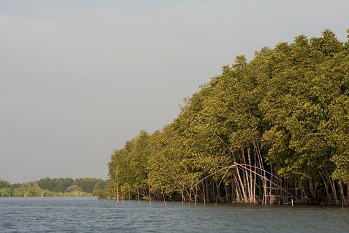 ป่าโกงกาง.