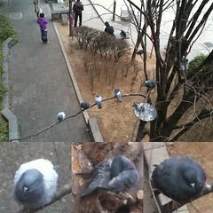 木にとまってる鳩を上から目線で撮影!