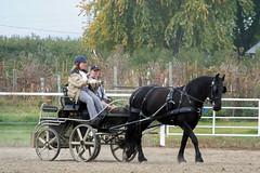 100b4640 (obsidianmoonranch) Tags: horses horse equestrian equine friesian horsemanship carriagedriving