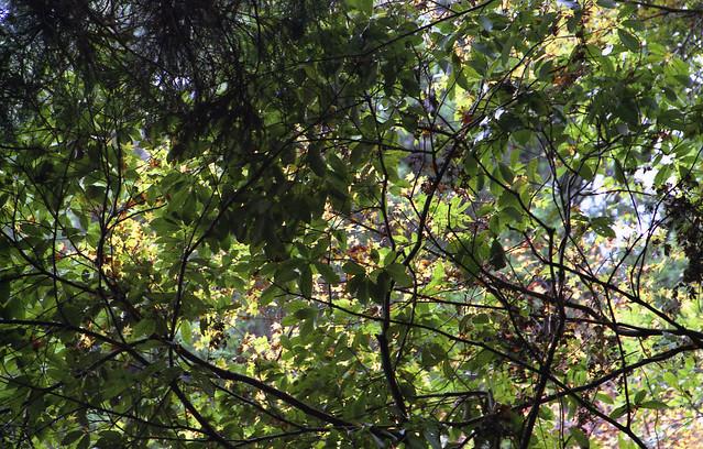 生い茂る葉のフリー写真素材