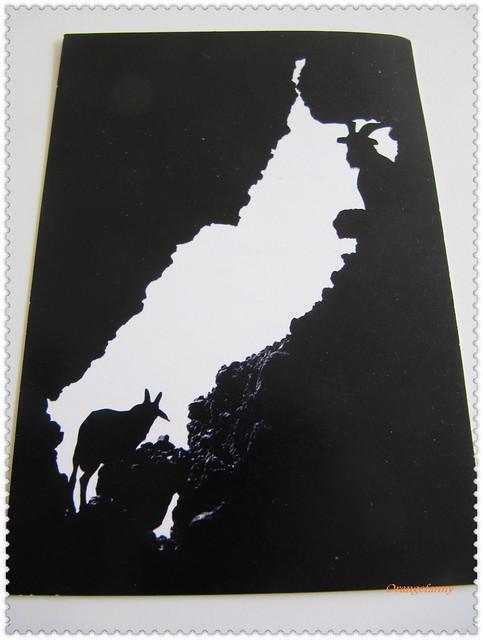 110209 來自小豬的新年明信片