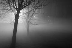 Ritrovarti (scarpace87) Tags: life park light bw parco white black tree fog night bn nebbia albero bianco nero notte luce vita 105mmf28