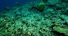 El Nido Day4 (39) (amorey) Tags: sunset philippines secretbeach clownfish hiddenbeach nido elnido palawan starbeach nemofish matinloc helicopterisland hadefecottages
