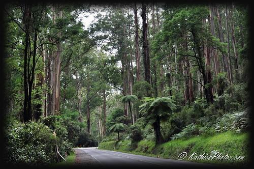 49-365 Road to Kallista