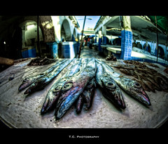 Fisheyes (iPh4n70M) Tags: fish eye photography photo nikon photographer photographie place market oeil fisheye morocco photograph maroc tc souk medina nikkor 16mm poisson marché essaouira hdr mogador photographe 5xp d700 5raw tcphotography ph4n70m iph4n70m tcphotographie