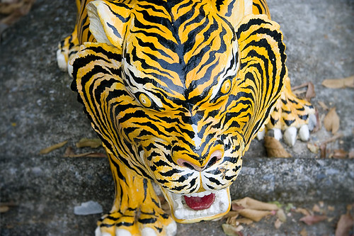 Tiger at Monkey Hill shrine