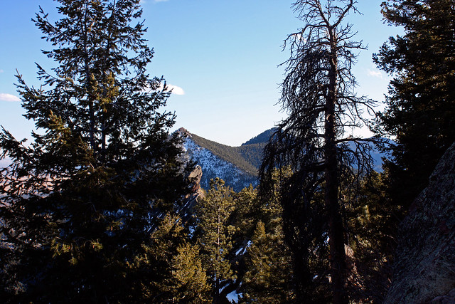 Bear Peak and South Boulder Peak, amist the trees of Green Mountain