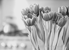 tulips & teapot (Janine Graf) Tags: flowers bw kitchen monochrome canon tulips bokeh stove bloom teapot 5d markii kitchenflowers janine1968