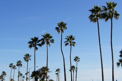 Beach: Palm trees