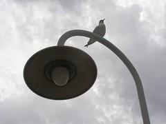 Cielo grigio su, cielo grigio giù (fede0253) Tags: harbour genoa genova minimalism minimalismo gabbiano seagul lampione portoantico ghesemmu fede0253