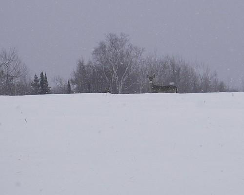 2011-02-27 at 15-37-19