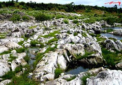 Harmoney in the whites and green (AshMec) Tags: india white green water grass river rocks marble jabalpur maheshwari ashveen ashmec