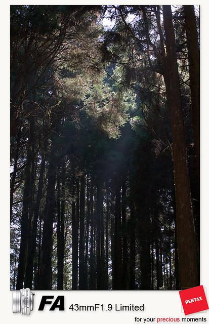 2011/2/27-漫遊阿里山