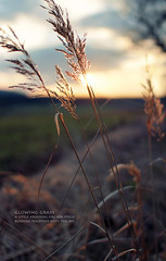 glowing grass (Youronas) Tags: light sunset sun sunlight grass 30 canon germany landscape bayern deutschland bavaria even