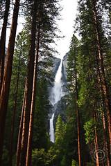 Through the Redwoods - Upper and Lower Yosemite Falls, Yosemite National Park, CA (joshp428) Tags: water waterfalls yosemite nationalparks tokinaaf1224mmf4 riversandlakestnc11
