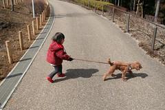 犬に散歩させられる人