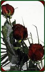 In numele trandafirului (5) by claudiunh