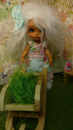 Loofthewood : Lati family : Arya (Lati Yellow Haru tan) circus -  pg14 5506124595_b97bf1f9bc