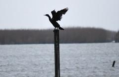 BirdingLouisiana-07