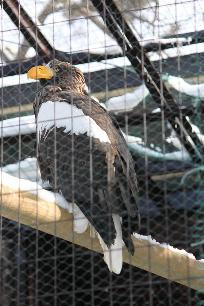 Sapporo Maruyama Zoo (28)