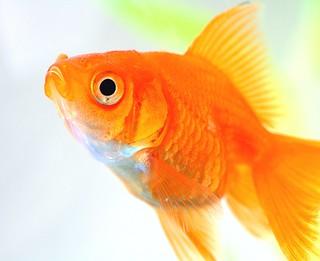 carlos the fish