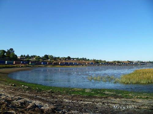 coastal cleanup 029