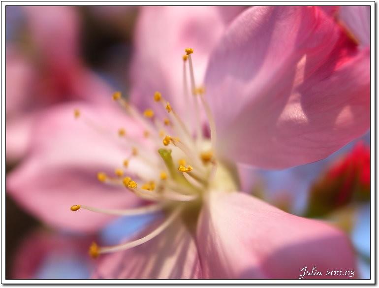 櫻花 (7)
