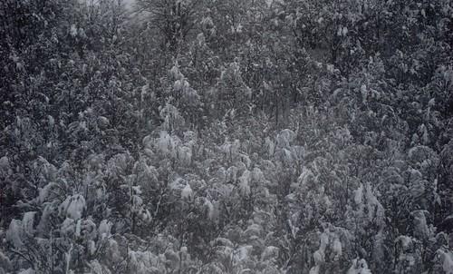Schnee Sk 1c