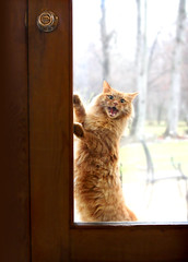 Let Me IN! (drdesigns) Tags: orange cat march crazy interesting funny meow tamron t3i letmein 2875 bestofcats drdesigns artistpickmay11