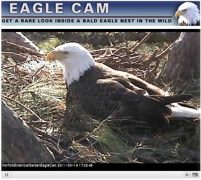 03-16-eagles