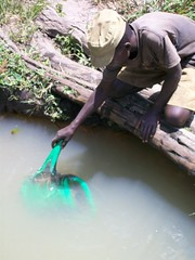A watering can is used to collect water