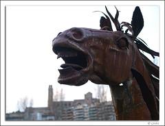 cavall de ferro (camarasa62) Tags: horse animal caballo caballos olympus zuiko lleida lerida e500 caball caballs