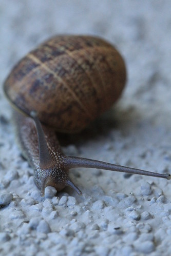 Snail on Stucco