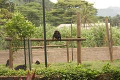 West Africa-5915