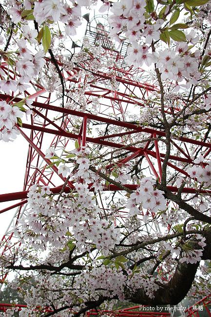 阿里山櫻花季陰天版19