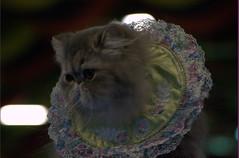 DSC_0241 (Francesco_Fontana) Tags: cat kat chat gato katze mace  macska gatto  con kot gat koka kedi kass katt kissa kttur maka kucing pusa mo   kat     pisic  qattus   kais