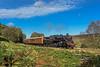 Machynlleth Remembered (4486Merlin) Tags: 7603876079 brstd4mt260 england europe exbr heritagerailways northeast northyorkshiremoorsrailway railways steam transport unitedkingdom ellerbeckgoathlandmoor northyorkshire gbr nymr autumn gala