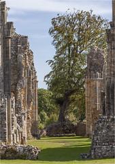 Bayham Abbey 10 (mini-b) Tags: bayhamabbey ruins englishheritage 13th15thcentury frant eastsussex canon eos5dmkii ef28300mm3556lisusm 2016