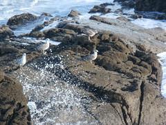 splash (jesust793) Tags: gaviotas mar sea ola