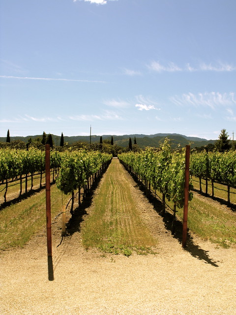 Vineyards of Napa
