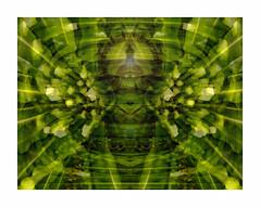 GreenArcanum (artphoto2005) Tags: green pentax hdr arcanum photoshopcs3