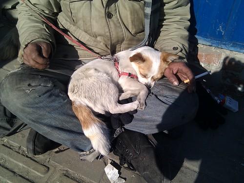五道口,乞丐大叔怀里的小狗,太可爱了!大叔看了照片很开心,互道了新年快乐。