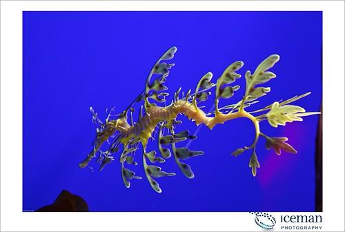 Dubai Aquarium 228