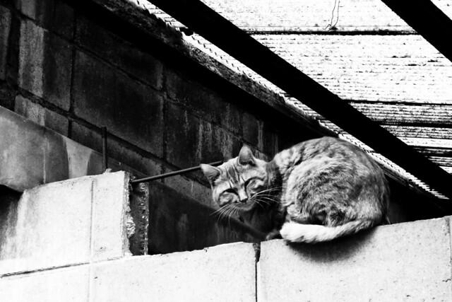 Today's Cat@2011-01-30